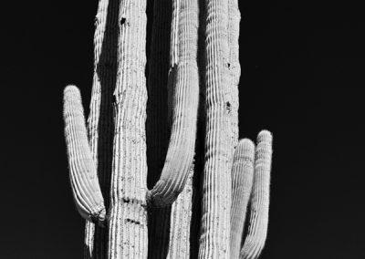 Saguaro #1 AP