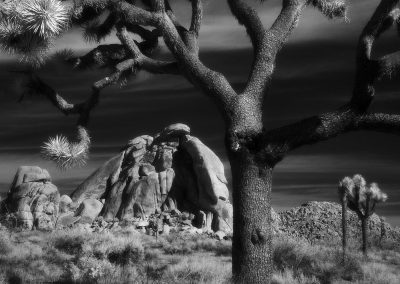 Joshua Tree National Park, CA- Square, Edition 1/3