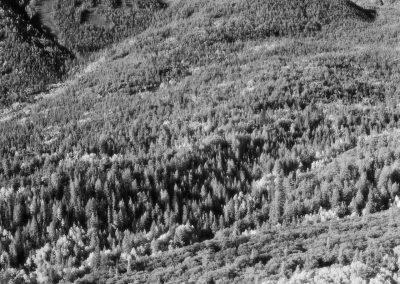 Great Basin National Park - Wheeler Peak